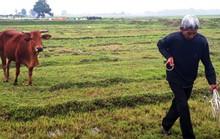 """Vụ bắt trâu, bò """"cõng"""" phí gặm cỏ: Chủ tịch xã bị kiểm điểm rút kinh nghiệm"""