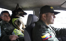 Băng đảng ma túy treo thưởng 70.000 USD giết chó nghiệp vụ