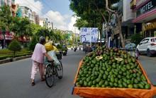 Trái cây ngon bán đi đâu?