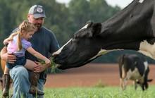 Sữa organic thực thụ gặp khó ở Mỹ