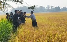 Nông dân lãi hơn 50 triệu đồng/ha nhờ trồng lúa sạch