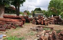 Lãnh đạo kiểm lâm tiếp tay trùm gỗ lậu