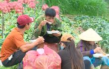 VIDEO: Nông sản Trung Quốc nhái Đà Lạt: Giết chết nông dân