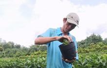 Nông dân Sa Đéc thuần hóa nhiều giống cây kiểng độc, lạ