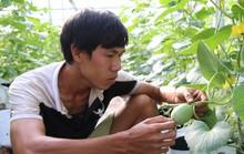 Kỹ sư nông nghiệp Israel miệt mài trồng dưa lưới ở miền Tây