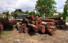 Khởi tố hạt trưởng kiểm lâm tiếp tay cho trùm gỗ lậu Phượng râu