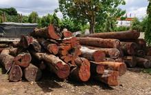 Khởi tố thêm lãnh đạo kiểm lâm tiếp tay trùm gỗ lậu Phượng râu