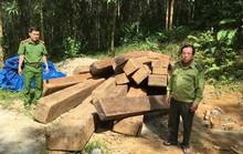 Phát hiện 24 phách gỗ xoan đào giấu trong rừng