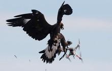 Hiểm họa khủng bố từ robot bay: Hung thần móng vuốt nhọn