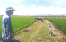 Nhiều khoản phí lạ ở Quảng Bình: Trâu, bò, vịt, máy cày,… ra đồng phải đóng phí