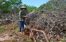 Diễn biến mới liên quan vụ xả súng ở Đắk Nông