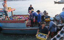 Sướng mắt với chợ cá tươi roi rói vào buổi sớm mai ở Bãi Phủ