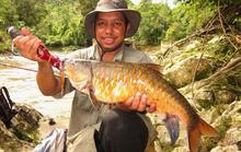 Quý như vàng, đặc sản cá vong bất liễu ngư được đại gia săn lùng