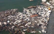 Cá chết trắng nổi lềnh bềnh tại hồ điều tiết ở Đà Nẵng