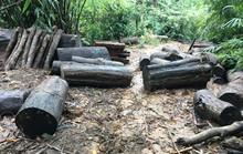 Khởi tố vụ án phá rừng ở Đạ Tẻh