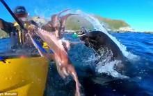 Hải cẩu quật bạch tuộc vào mặt người trên thuyền