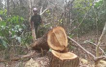 Khám nghiệm hiện trường vụ Tàn sát rừng phòng hộ