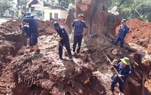 Nhiều nhà khoa học đành bó tay cứu cây di sản