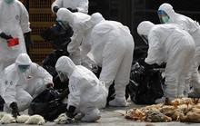 Trung Quốc gây lo ngại về dịch H7N9