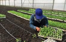 Gian nan tìm đất làm nông nghiệp sạch