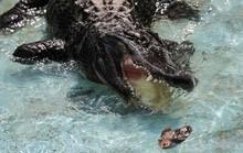 Cá sấu huyền thoại