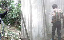 Rùng rợn chuyện lao vào rừng sâu săn rắn ở Lào Cai