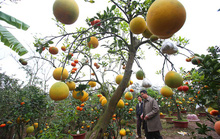 Trồng cây 11 loại quả bán dịp Tết