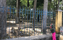 Khỉ liên tục tấn công người ở Tây Ninh