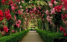 Những vườn hoa đầy mê hoặc ai cũng thích