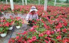 Chùm ảnh: Ngắm làng hoa Vân Dương vào mùa vụ Tết