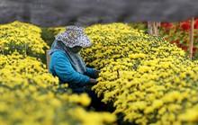 TP HCM: Trăm hoa đua nở chờ Tết