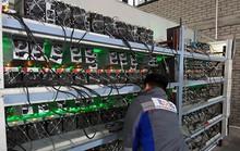 Thợ đào tiền ảo 'mất Tết' vì bong bóng Bitcoin vỡ