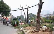 Hà Nội chi hơn 7 triệu đồng chặt mỗi cây xanh trên đường Láng dài 4 km