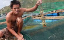 Lập chiến lược nuôi, trồng thủy sản