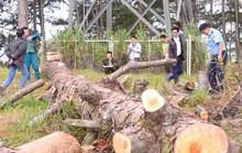 Xà xẻo đất rừng