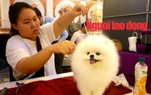 Hàng trăm chó đẹp đến từ nhiều quốc gia tranh sắc tại Bình Dương