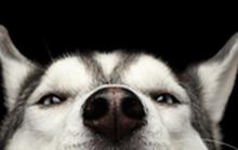 Những khoảnh khắc ngộ nghĩnh của các chú cún