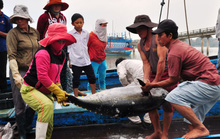 Nỗ lực gỡ thẻ vàng thủy sản: Nói không với đánh bắt trái phép