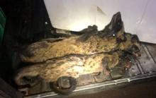 Phát hiện hàng trăm cá thể động vật hoang dã trên xe khách