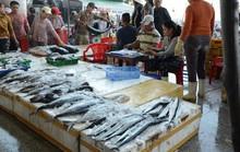 NỖ LỰC GỠ THẺ VÀNG THỦY SẢN (*): Bước chuyển mô hình nghề cá có trách nhiệm