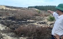 Tạm dừng dự án để mất 140 ha rừng nhằm phục vụ công tác điều tra