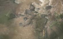Đàn voi chết thảm sau khi rơi xuống thác nước