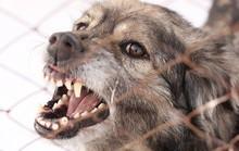 Dùng biện pháp dân gian lấy nọc chó dại, bé 5 tuổi chết oan