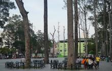 Ngỡ ngàng hình ảnh cả chục cổ thụ gục chết ở công viên Văn Lang