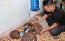Truy đuổi 2 km, phát hiện 5 cá thể Tê tê Java chuẩn bị đưa đi xẻ thịt