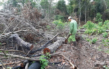 Giao rừng rồi mất rừng, mất luôn cán bộ