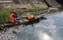 Bất ngờ với nguyên nhân khiến hàng tấn cá chết nổi trắng hồ Đại An
