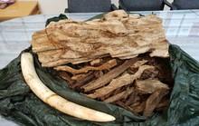 Hơn 24 kg nghi ngà voi, trầm hương từ Thái Lan bị vịn ở sân bay