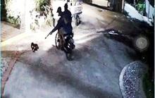 Clip: Sử dụng súng điện bắn chó