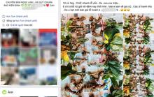 Quốc bảo Sâm Ngọc Linh thành hàng chợ, bán đầy trên mạng xã hội